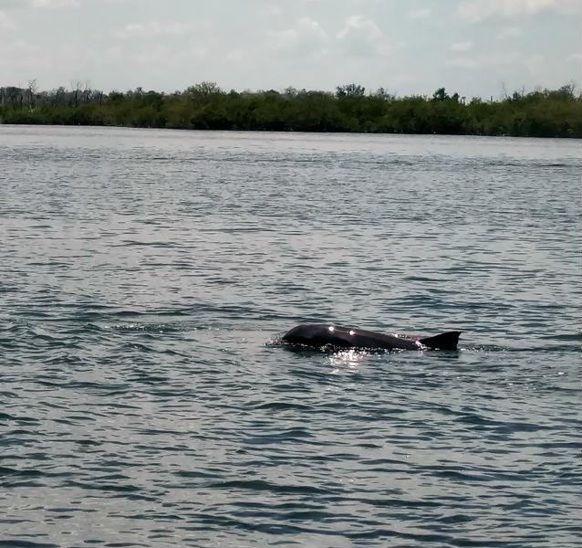 dolphin-800x600